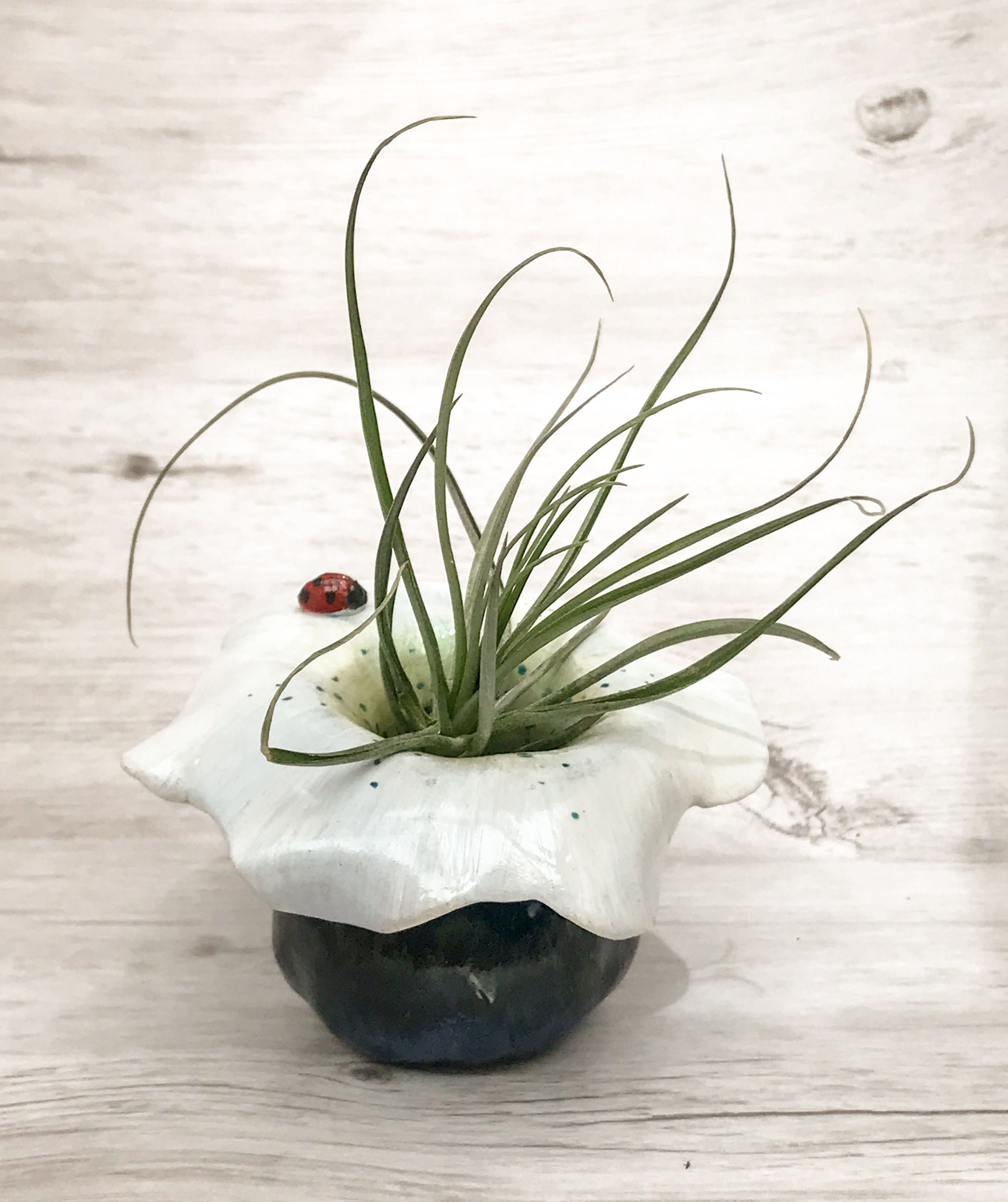 Air Plant In Pinch Pot Sculpture By Nicole The Artist