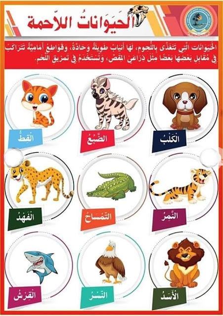 التغذية عند الحيوانات الحيوانات العاشبة الحيوانات اللاحمة الحيوانات الكالشة بحوث مدرسية Learning Arabic Arabic Kids Arabic Alphabet