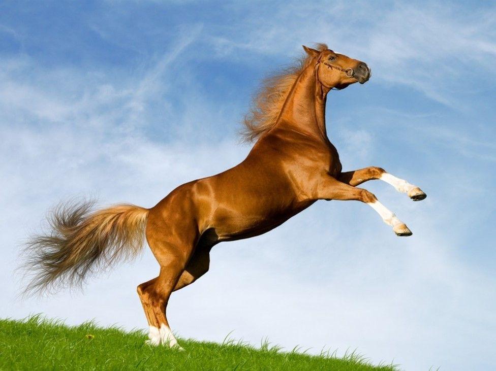 تعرف على تفسير حلم الحصان في المنام لابن سيرين موقع مصري In 2021 Horses Animals