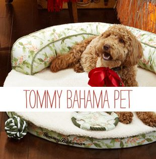 We Ve Teamed Up With Tommy Bahama Who Has Pledged To Donate 5 Of The Sale Price From Their Pet Collection To Support Our Ani Pets Humane Society Animal Rescue