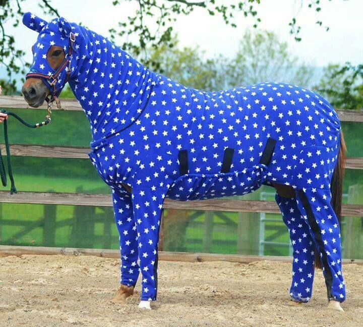 A Horse In Pajamas Horses Funny