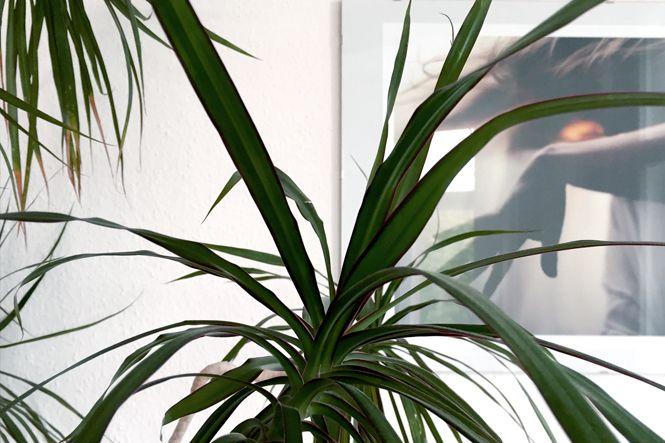 Wohnzimmer Palme ~ Palmen für ein sommerlich elegantes schattenspiel im wohnzimmer