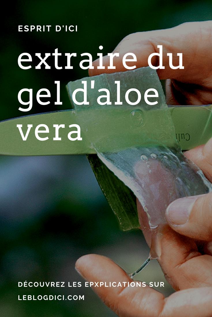 Comment faire du gel d aloe vera soi-même   Quels sont les bienfaits ... 697ed67fc673