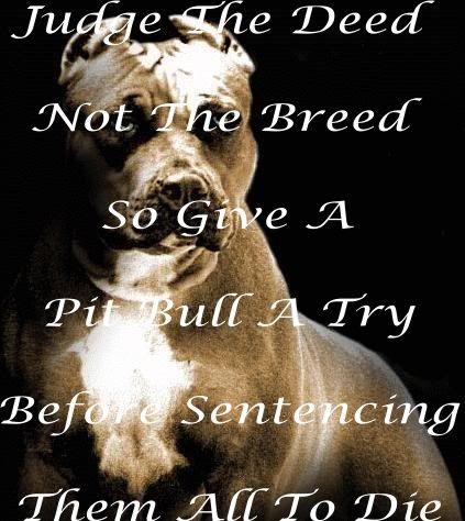 Pit Bull Quotes. QuotesGram
