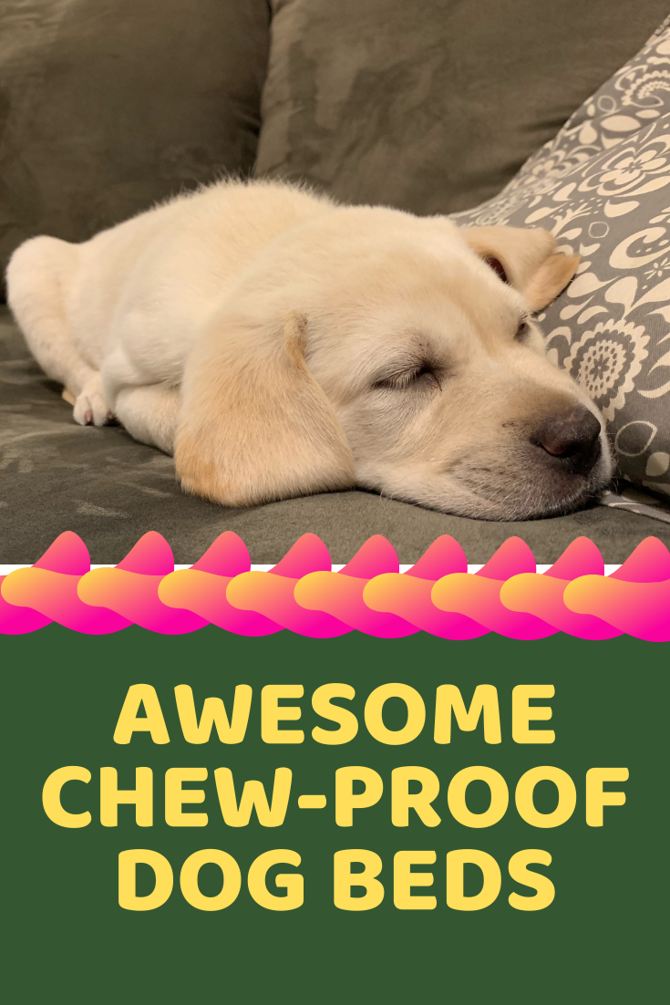 Best Chew Proof Dog Beds Tough Beds For Rough Dogs! dogs