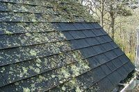 How To Remove Moss Lichen From The Roof With Vinegar Hunker Cleaning Hacks House Cleaning Tips Cleaning Painted Walls