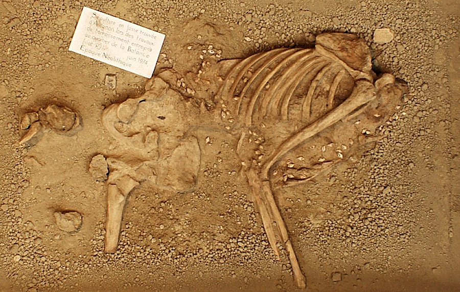 7,000YearOld Male Skeleton In Garment Decorated With Sea