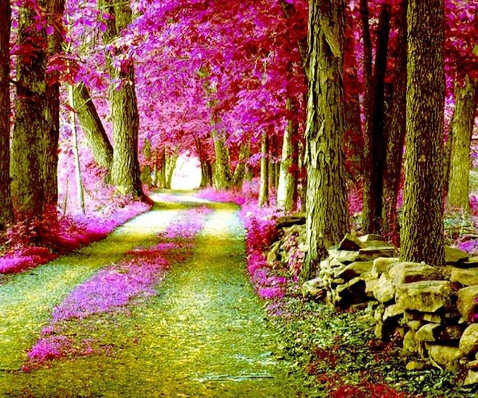 pink forest zen tree wallpaper