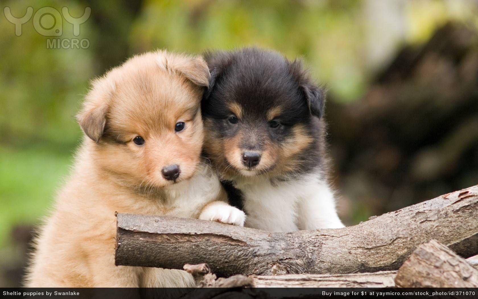 images of puppies Cute Pups Cute Pups wallpaper