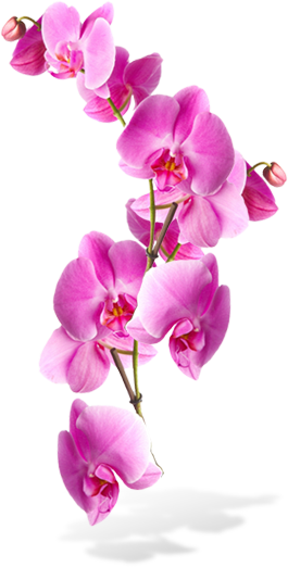 Pin by RT Digital Media Marketing on Backgrounds | Orchids ...