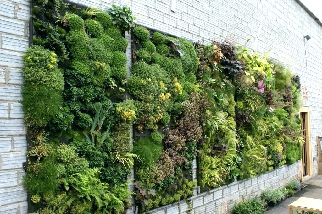 Build A Livingwall Verticalgarden Plants Placed On The Structures