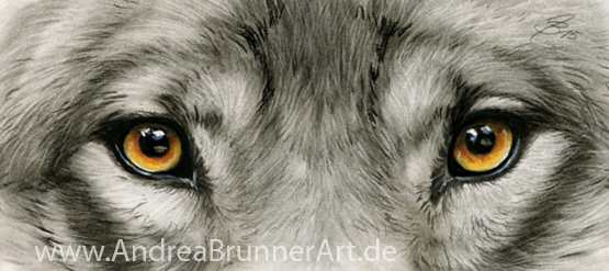 Wolf Eyes By Drehli On Deviantart Wolf Eyes Wolf Eye Tattoo Wolf Eye Drawing
