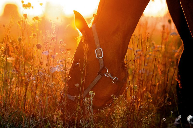 Horses - ardently.pictures