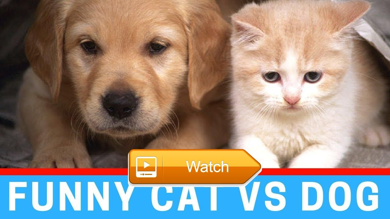 Funny Cat VS Dog pilation Funny Animal Video Cat And Dog Funny