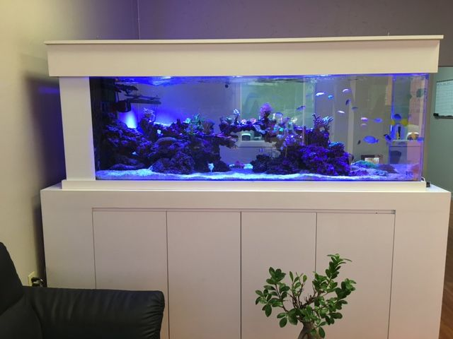 Custom Made Reef Aquarium White Stand And Roof Fish Tank Stand