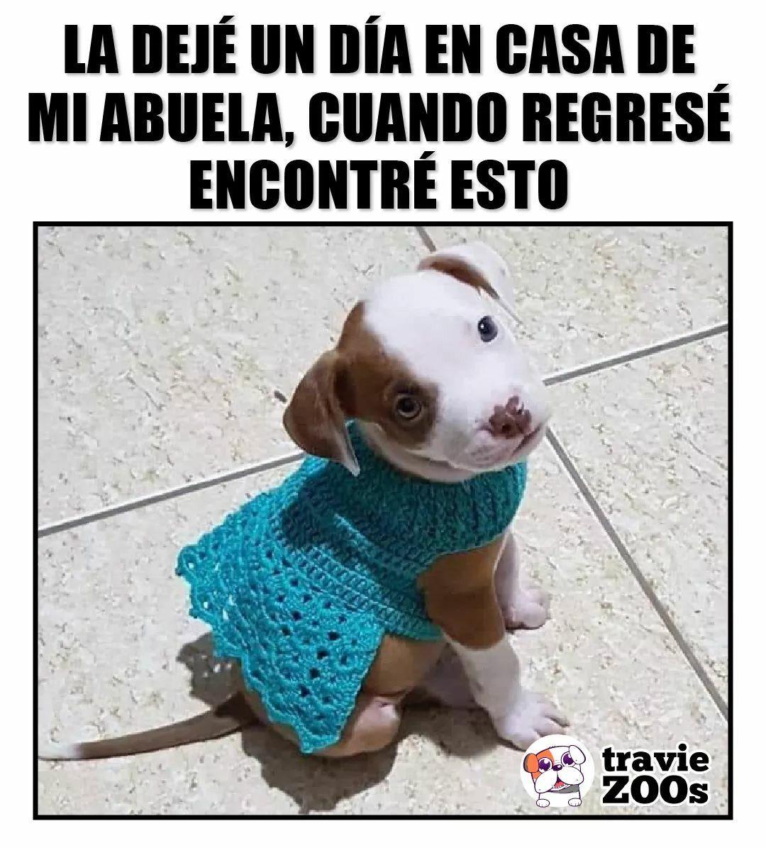 Pin De Maron En Xd Memes De Animales Divertidos Memes Divertidos Humor Divertido Sobre Animales