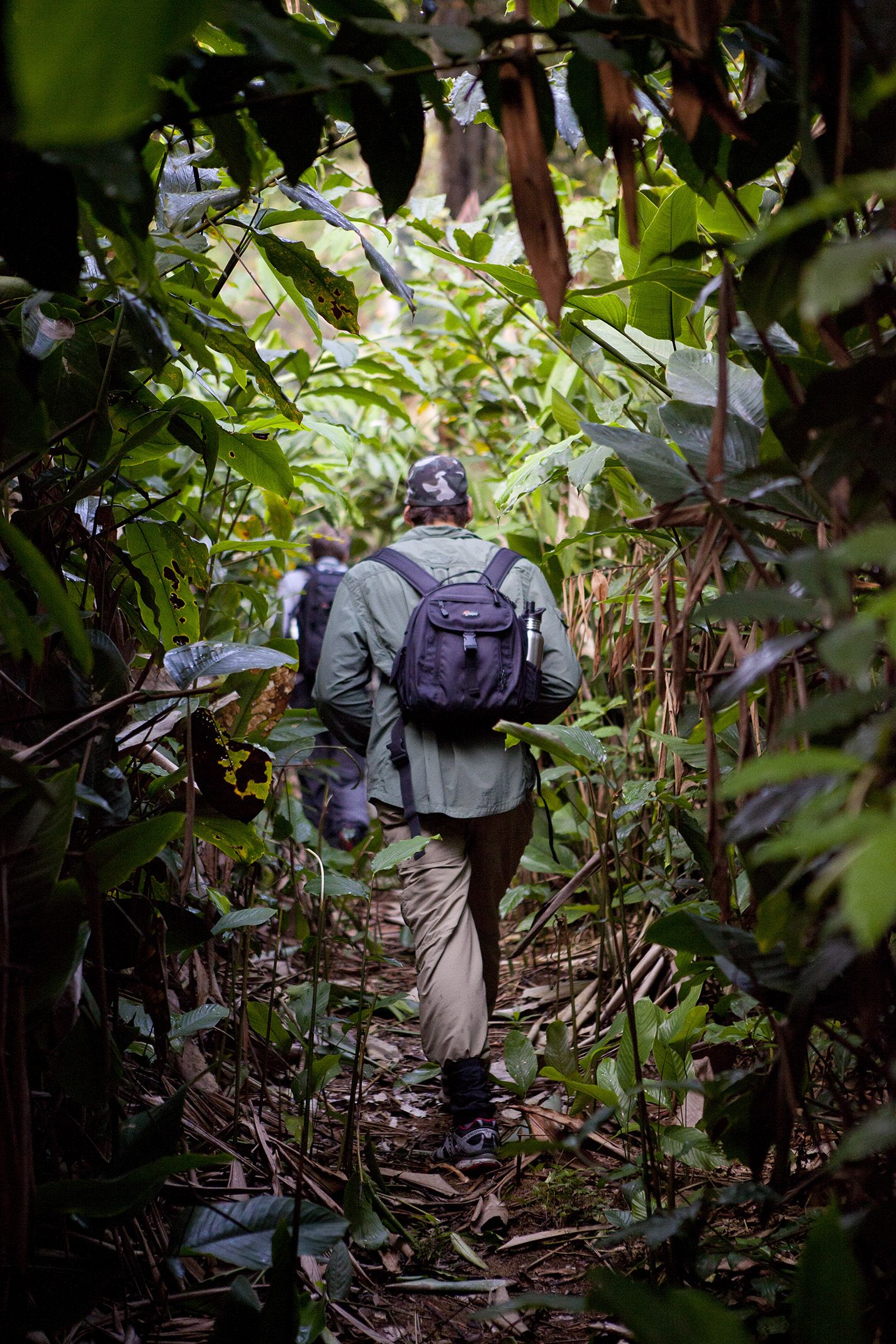 Gorilla Trekking 101 Go2africa Com Gorilla Trekking Trekking Where Is Africa