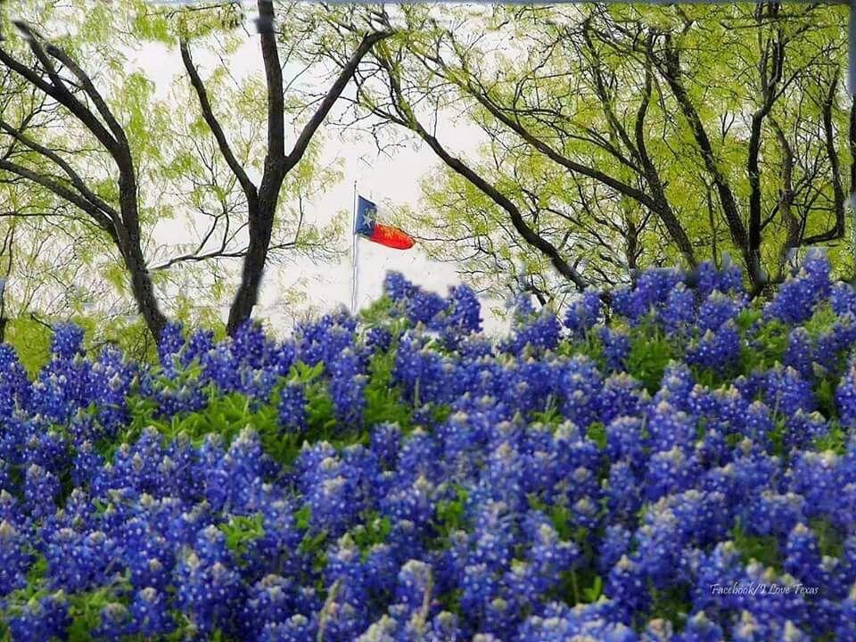 Texas Stuff Texas Blue Texas flags