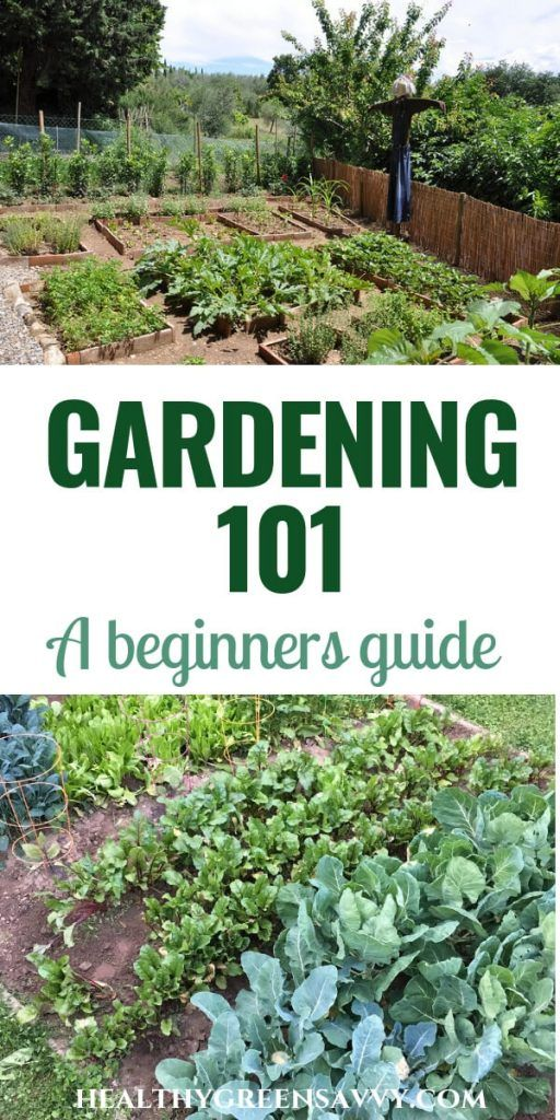 Gardening 101: How to Plant a Garden for Beginners