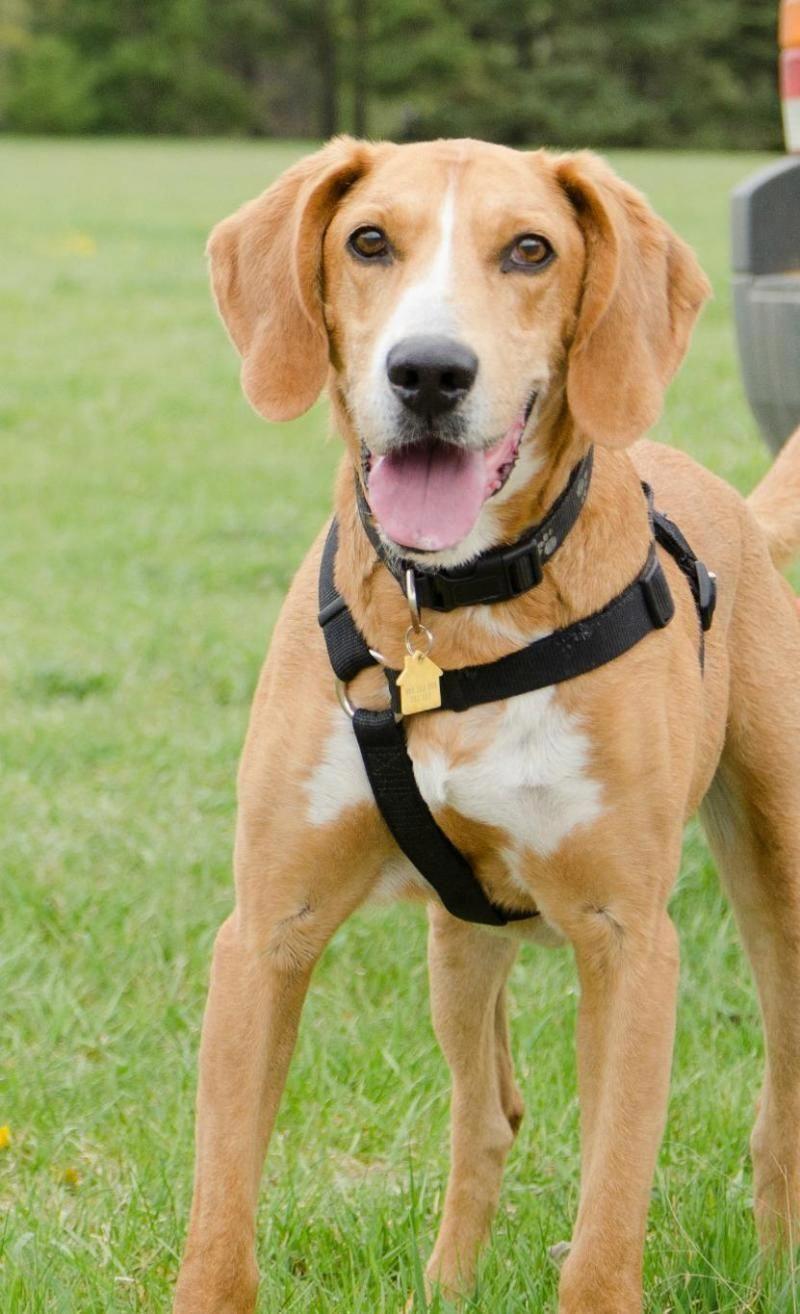 Distinguished Slashed Dog Aggression Training 5 Stars Dog Training Aggression Aggressive Dog Indoor Dog