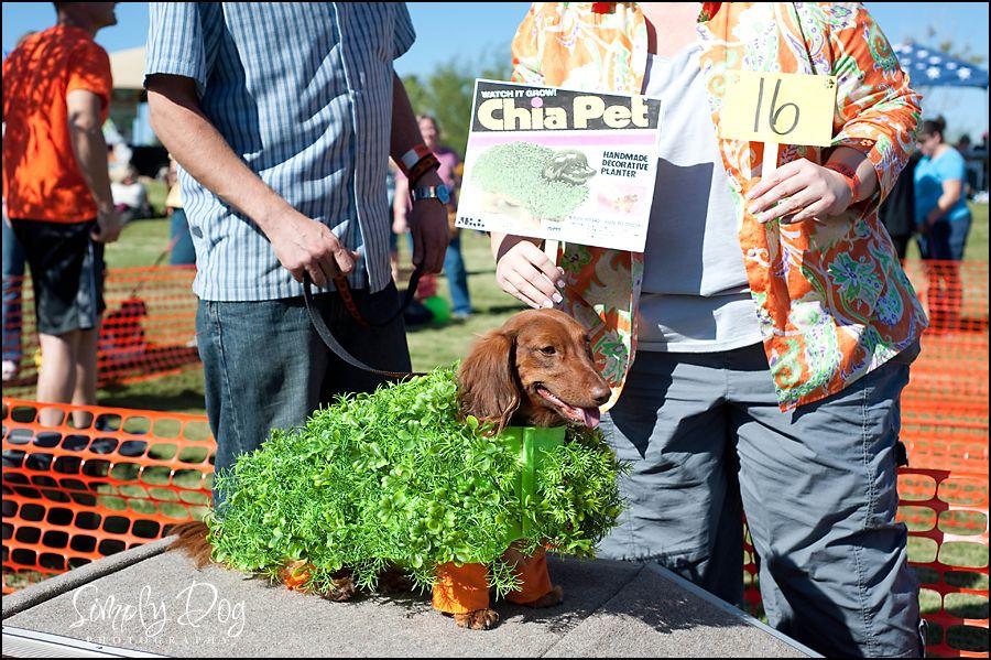 Miniature Dachshund Puppies Las Vegas Ideas