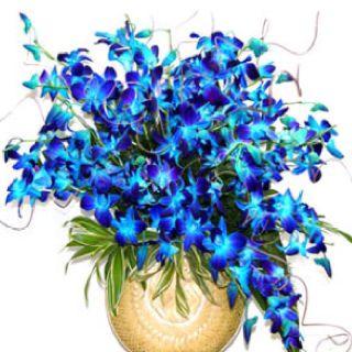 Blue Bombay Orchids Orchid Arrangements Blue Flower Vase Blue Orchid Flower