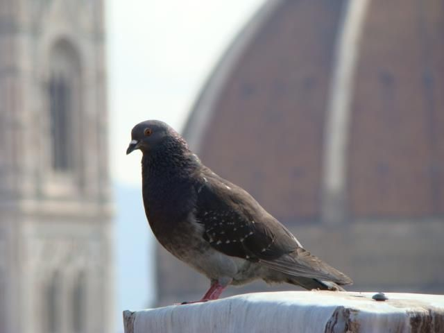 Birds on our rooftop terrace