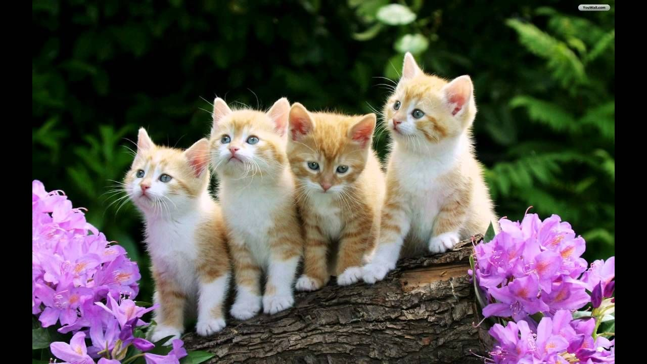 Beautiful Cats Images Beautiful Cats Pics Most Expensive Cat In The World Most Beautiful Cat Kittens Cutest Baby Cats Cute Cats And Kittens