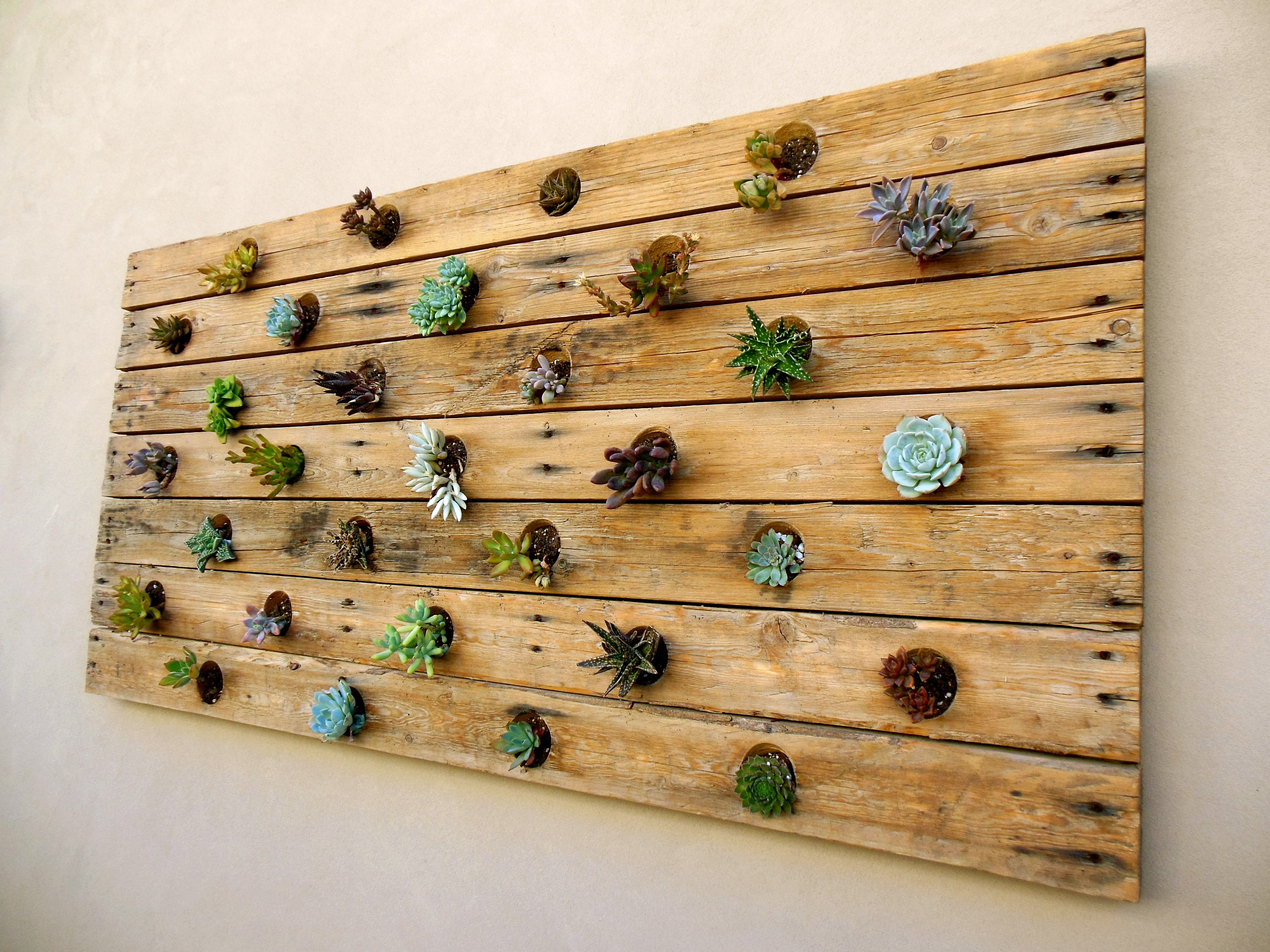 Palette Board Succulent Outdoor Wall Hanging (made By Eric Jones)
