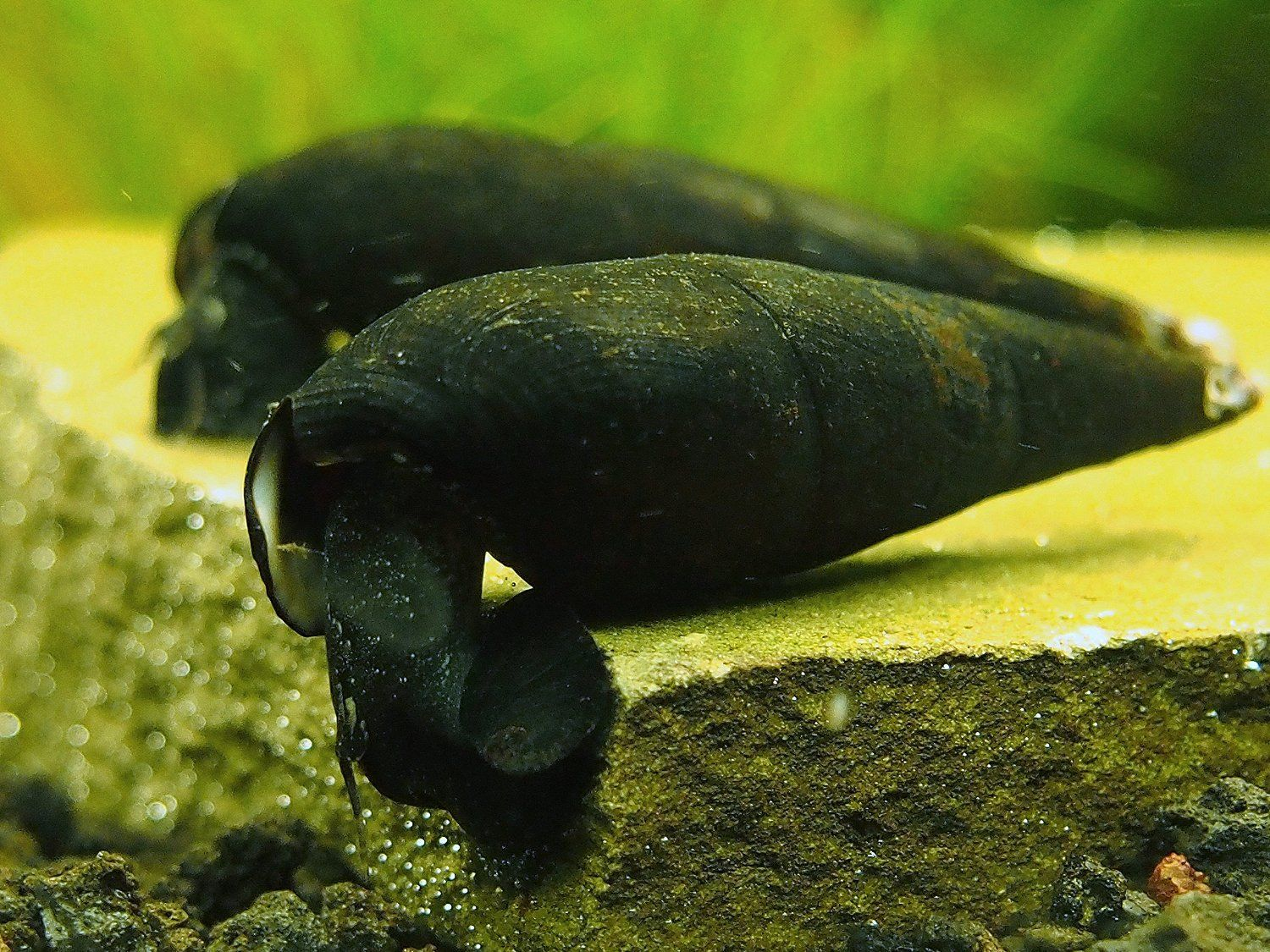 Freshwater Aquarium Fish Under 1 Inch - 482 best images about fish tanks on pinterest cichlids tropical fish and tropical aquarium