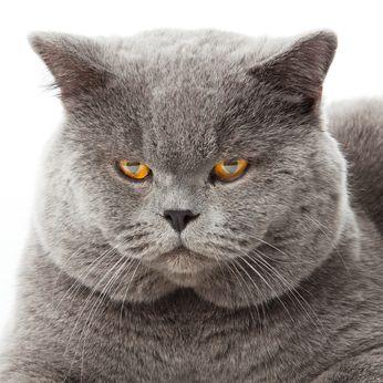 Heatstroke In Cats Dubai Veterinarians Http