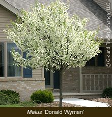 Small Flowering Trees For Landscaping One Of The Most 400 x 300