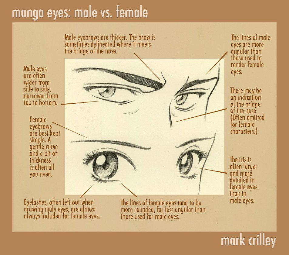 Manga Eyes Male Vs Female Differences Reference Chart By Mark