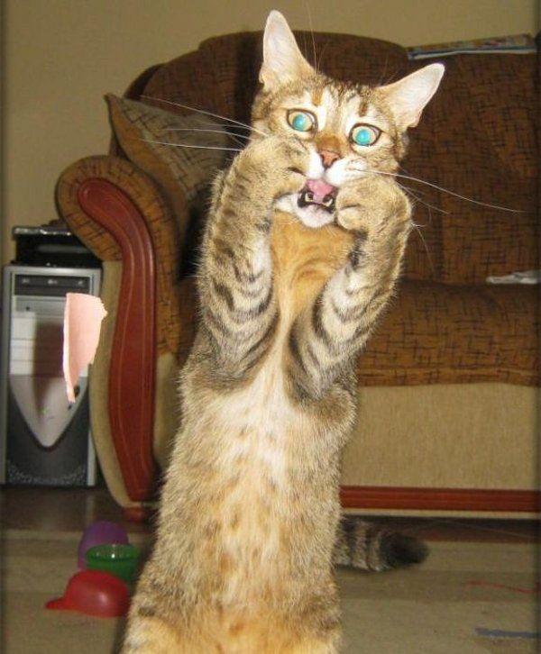 Resultado de imagem para funny cats scared