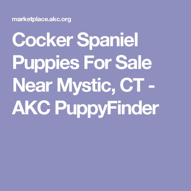 Cocker Spaniel Puppies For Sale Near Mystic Ct Akc Puppyfinder Cocker Spaniel Cocker Spaniel Puppies Spaniel Puppies
