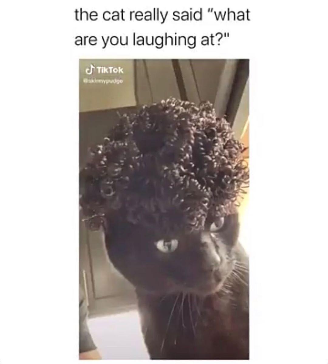 ... | 9meme.fun  #add #comedy #dailylols #dankmeme #emrubb #epic #f #f4f #follow #followbackalways #followme #freshmeme #funnies #funny #humor #humour #instagood #internetlols #internetmeme #laughs #like #lol #meme #memes #memesofinstagram #photooftheday #rainbowofmeme #shitsandgiggles #snapchat