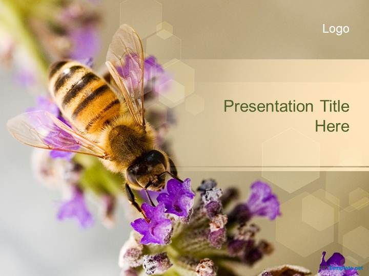 Free Bee Ppt Template Teachmetoread Pinterest Ppt Template