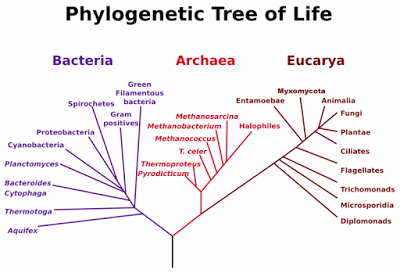 Massive Tree Of Life Map Connects 2 3 Million Organisms Phylogenetic Tree Tree Of Life Life Map
