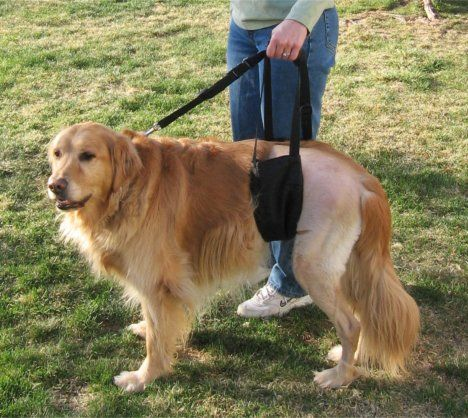 Dog Rear Lift Harness Support Sling Created For Hip Dysplasia