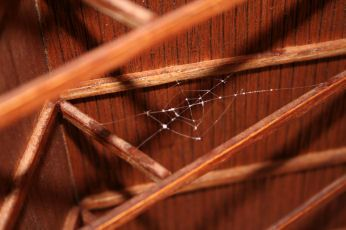 Castle Hill Spider's web in the attic. How to make