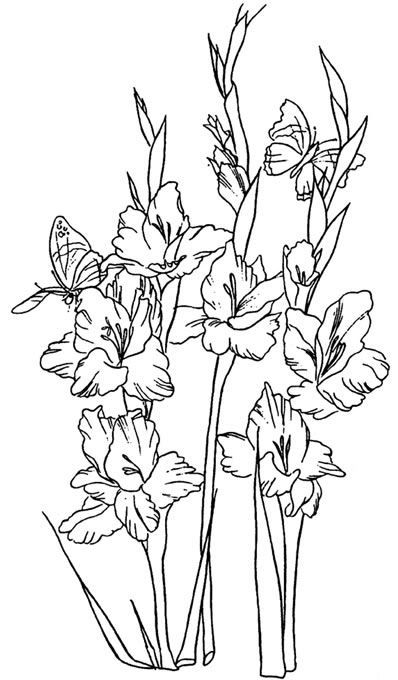 Gladiolus Flower On Pinterest