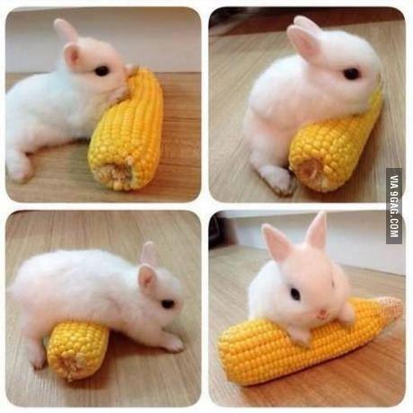 How do I eat it? It's bigger than I am!