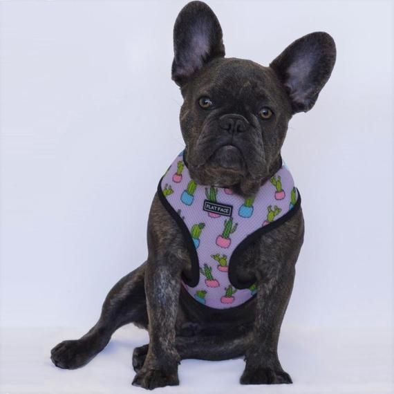 Flat Face Reversible Dog Harness French Bulldog Harness Boston