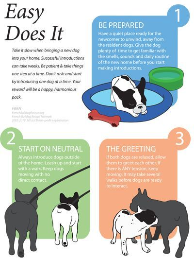 How To Introduce A New Puppy Into Our Home Introducing A New Dog