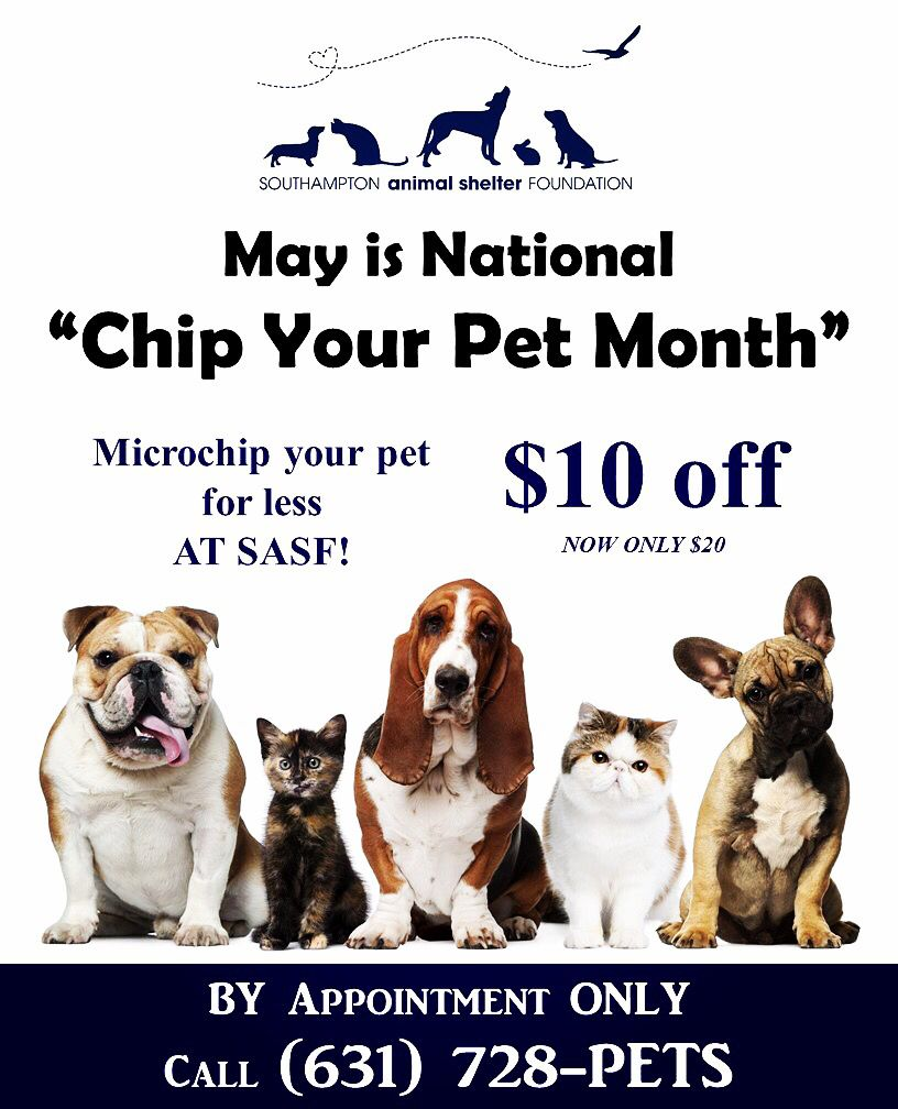 National Chip Your Pet Month Vet Jobs Pet Grooming Pet Dental Health Month