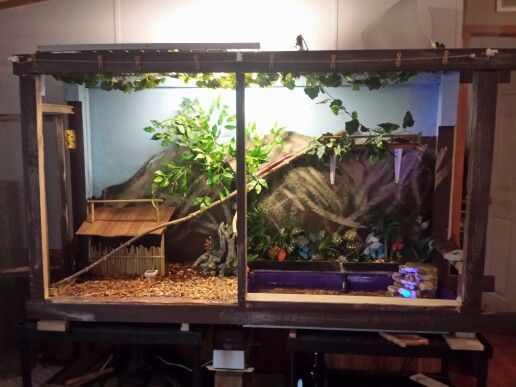 Vivarium For Our Chinese Water Dragon Hot Rod