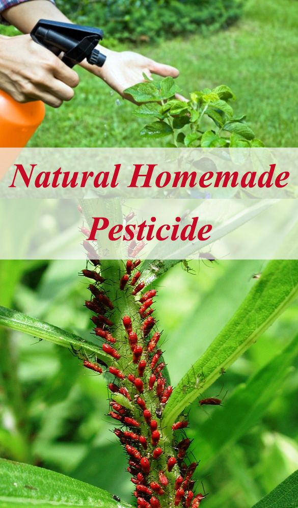 10 Homemade Pesticide To Save Your Garden Plants From Pests.