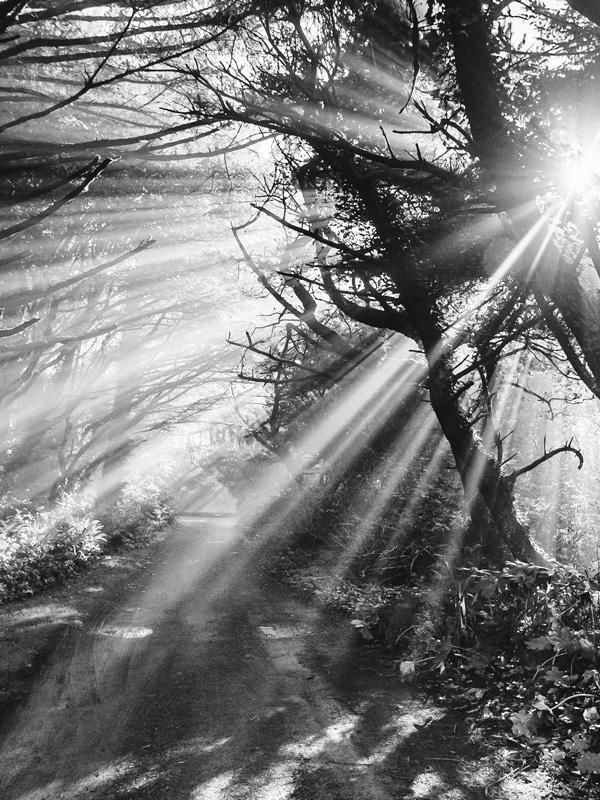 Sun beaming through trees on a beach path on the Oregon Coast. Into the Mystic black and white sun beam beach path print by Samba to the Sea at The Sunset Shop. #oregon #oregoncoast #pnw #pnwonderland