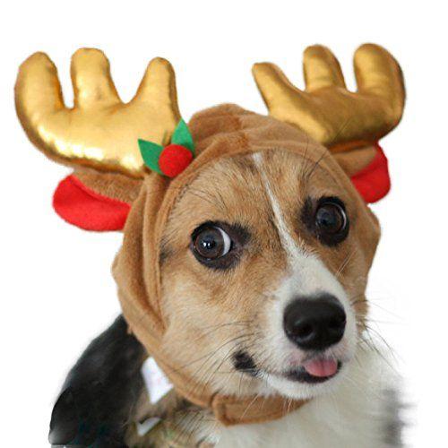 Pawliss Christmas Dog Reindeer Antler Hat Large Click On The Image For Additional Details Dog Reindeer Antlers Pet Costumes Christmas Dog