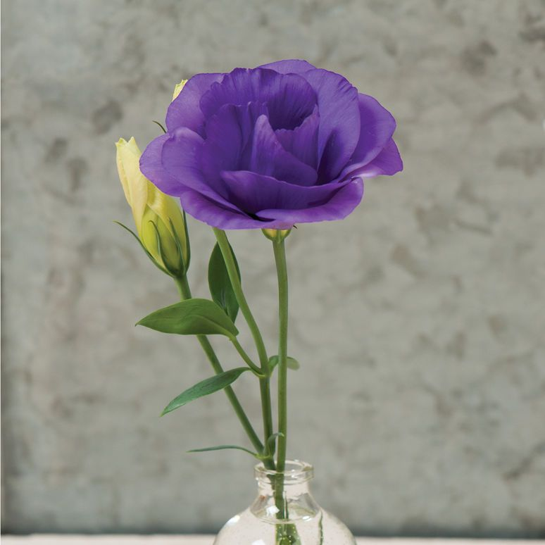 Mariachi Blue Pelleted F1 Lisianthus Seed Johnny S Selected Seeds Flower Garden Plans Flowers Beautiful Flowers